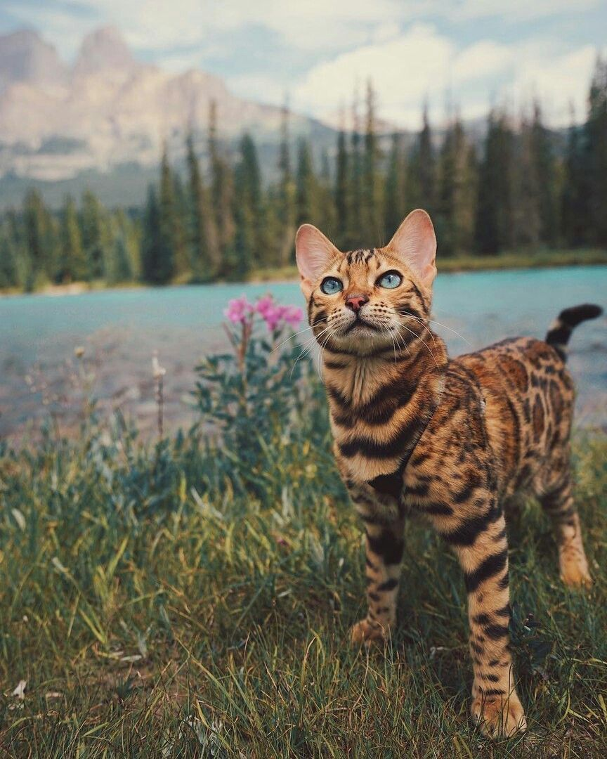 rawr // Pinterest itsjustdami Wild cats, Pets