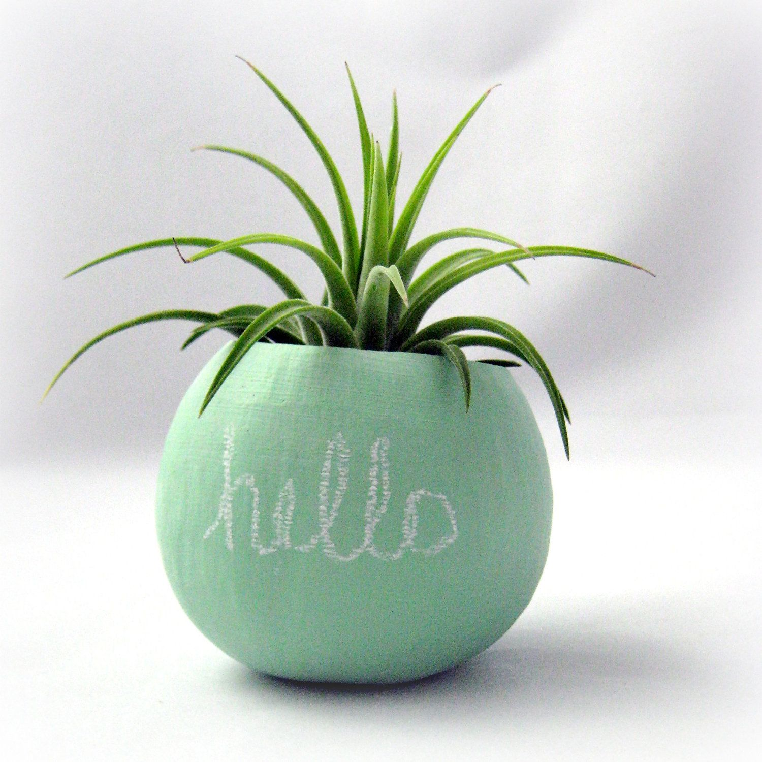 Air Plants Containers