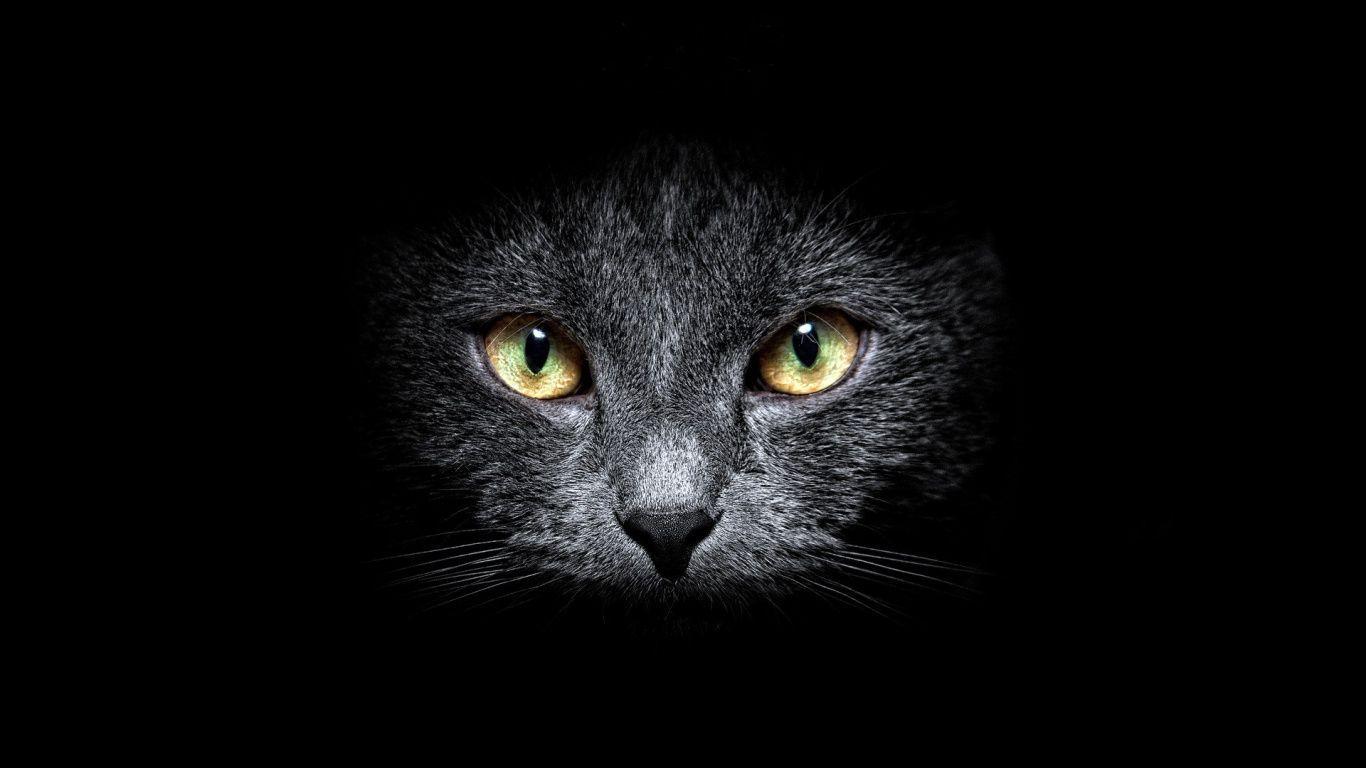 Pin By Best Of Wallpaper 4k On Hewan In 2020 Cat Wallpaper Black Cat Dark Wallpaper