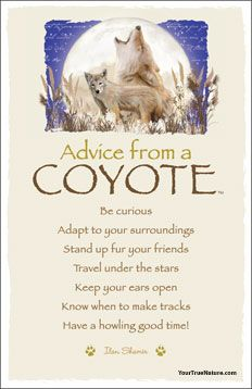 advice from a coyote frameable art postcard  animal