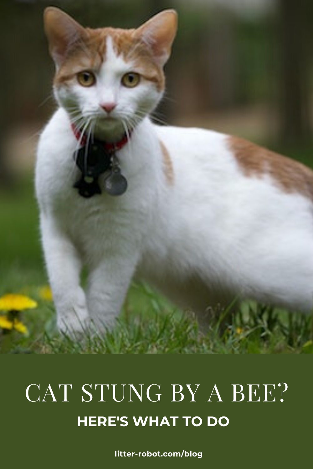 Cat Stung by a Bee? Here's What To Do LitterRobot Blog