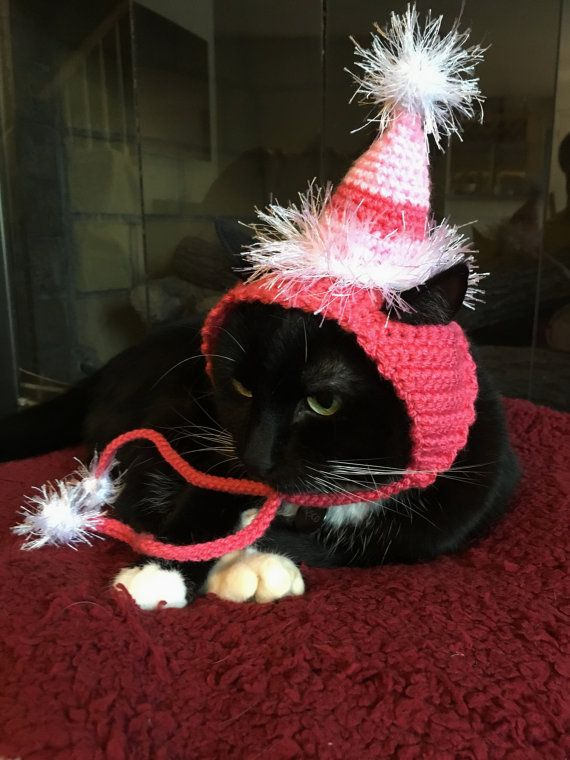 Cat Hat Happy Birthday For Party Small Dog Pink