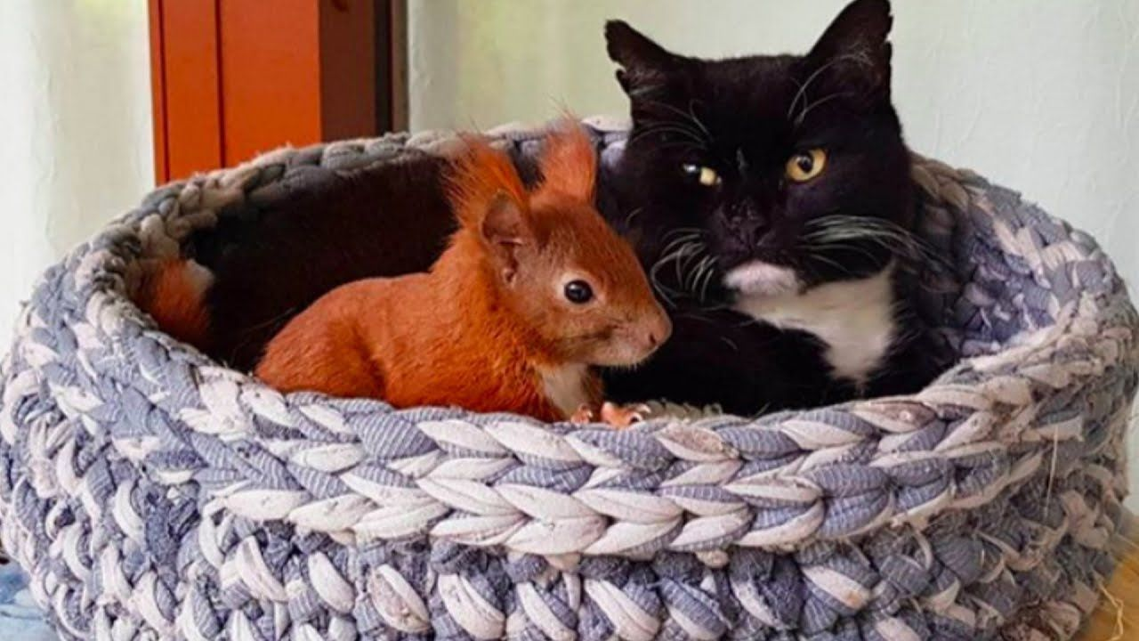 Man That Introduces Curious Cat To Weird Squirrel From His ...