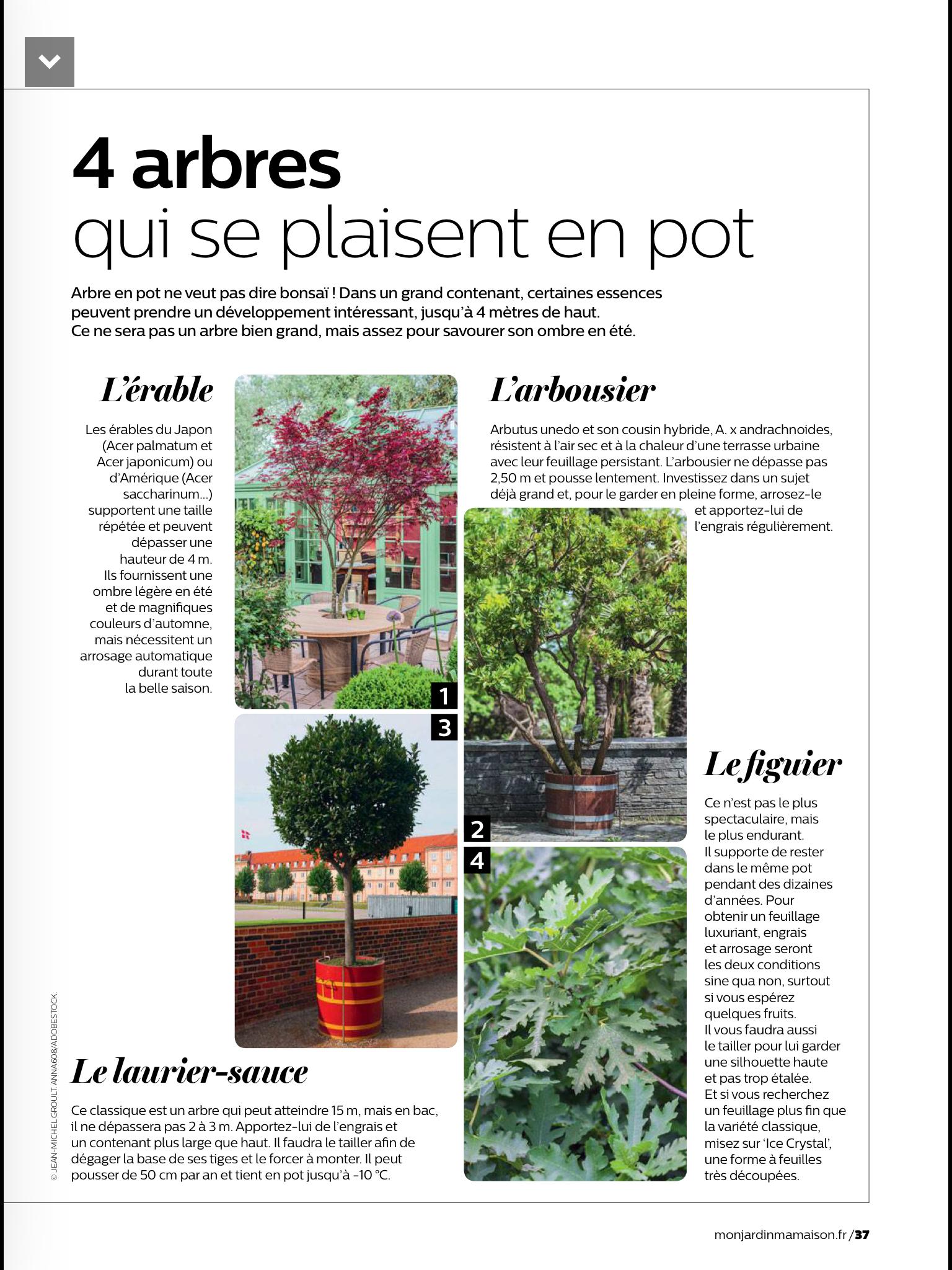 Arbre Persistant En Pot les arbres en pot | arbres en pots, jardins et arbousier