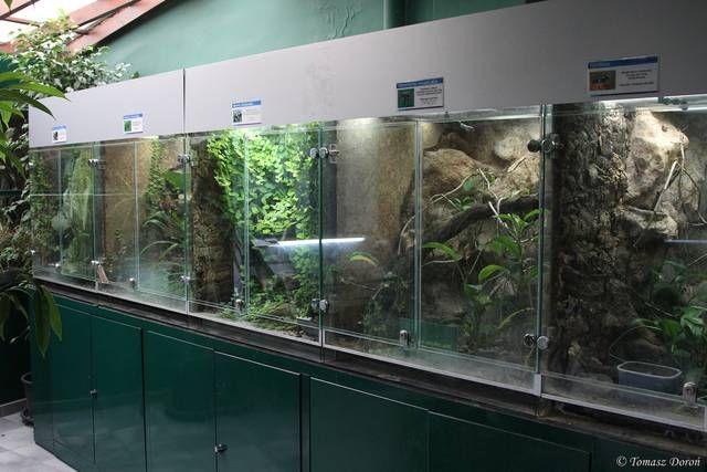 Budapest zoo and botanical garden terrariums for for Aquarium botanic