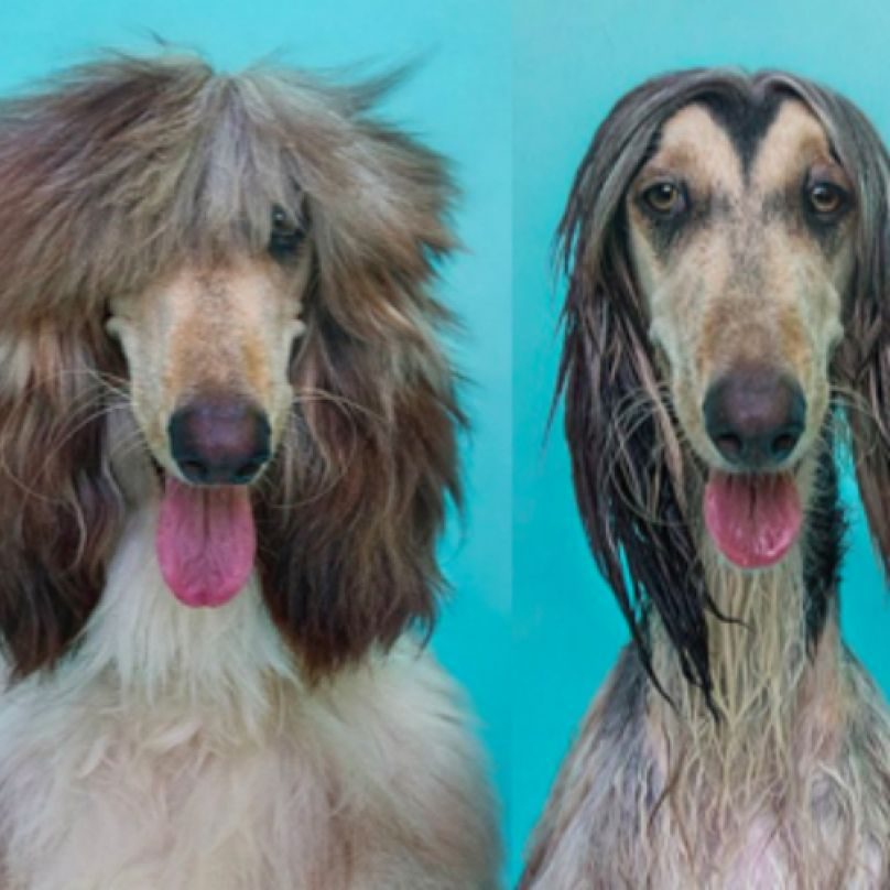 The Dry Dog Wet Dog Photo Series Will Remind You Why Your Dog