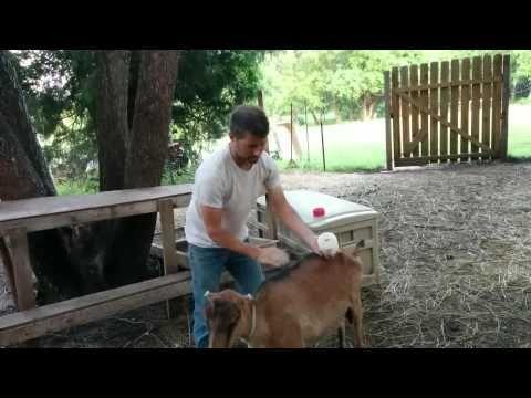Diatomaceous Earth Food Grade Applying to Animals ~ wormfarmingrevealed.com