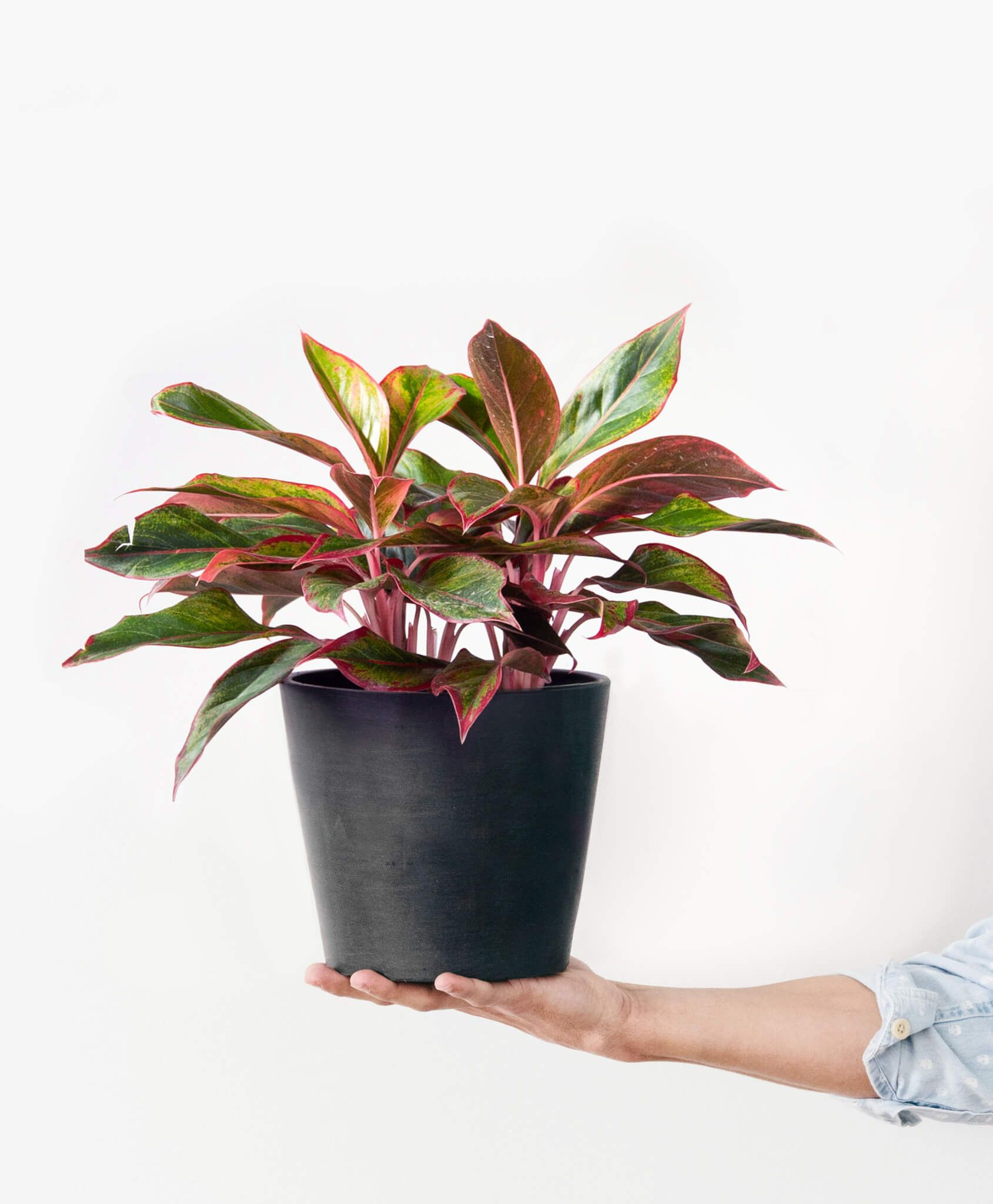 Home-Office-Plants