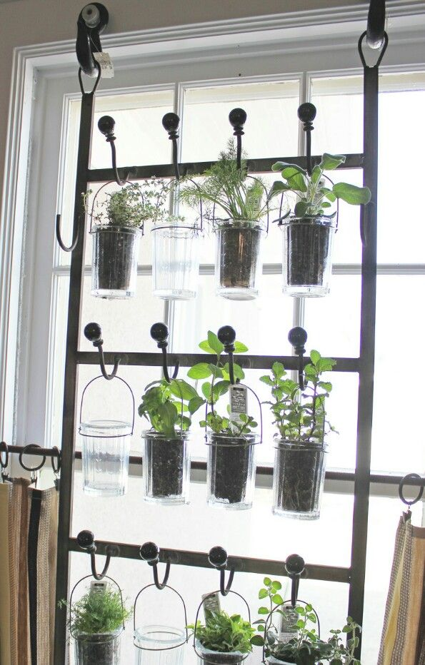 shoe rack as an herbal garden window herb garden herbs indoors herb diy window herb garden herbs indoors