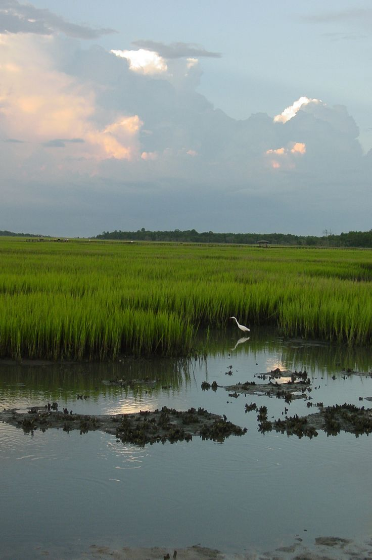 """Low Country Marsh Scene"" was taken in a favorite place to photograph the natural beauty of the low country of South Carolina!"