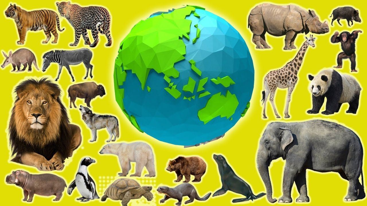 Earth day saving wild animals animals learn for kids