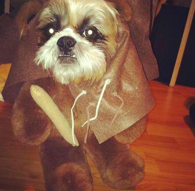 DIY ewok dog costume   DIY   Pinterest   Ewok dog costume