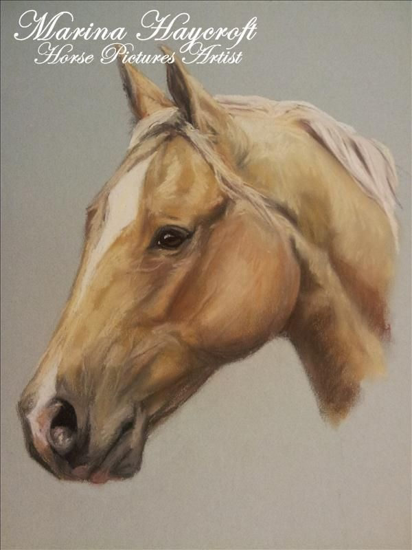 Equitana special 2011. My beautiful and talented friend creates these amazing horse portraits. @Marina Zlochin Haycroft