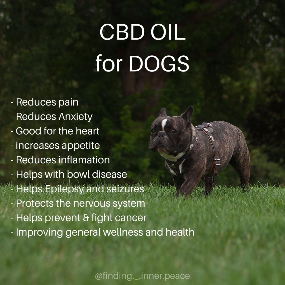 CBD OIL for dogs! | Homeopathic,Herbal Remedies | Oils for