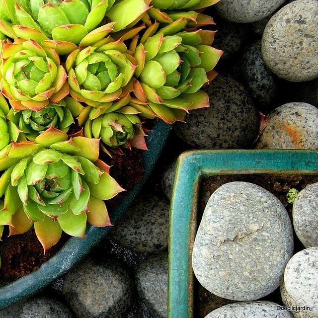 Jardines Zen- colocar jardines zen que represente los 5 elementos - jardines zen