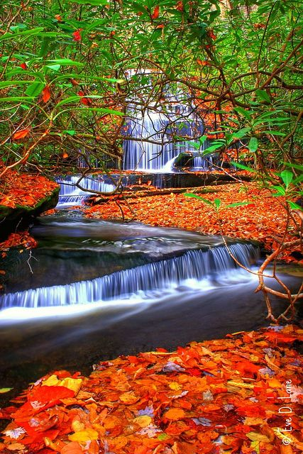 Autumn in Grogan Creek Waterfall, Pisgah Forest, North Carolina
