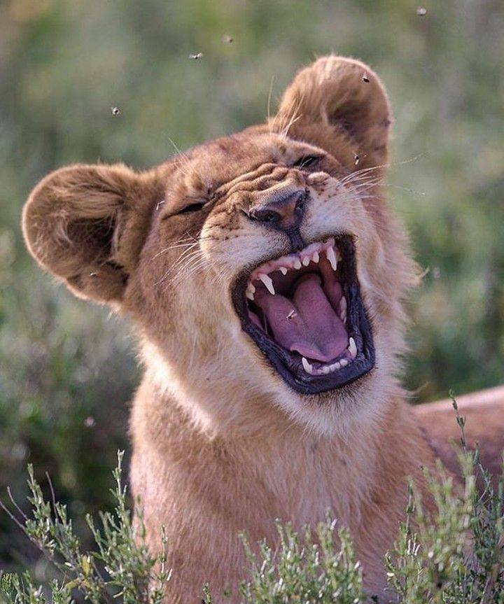встал картинки смеющихся зверей разочаровываются своих кумирах