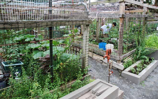 Berkeley Community Garden The Landscape Architect S Guide To
