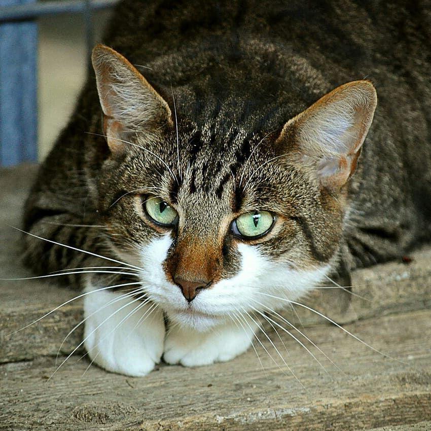 cat cats catsagram catstagram instagood kitten
