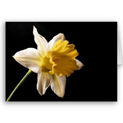 Daffodil Greeting Card by lisa1970