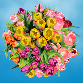 Tulips Flowers For Sale Free Delivery Flowers For Sale Tulips Flowers Wholesale Flowers