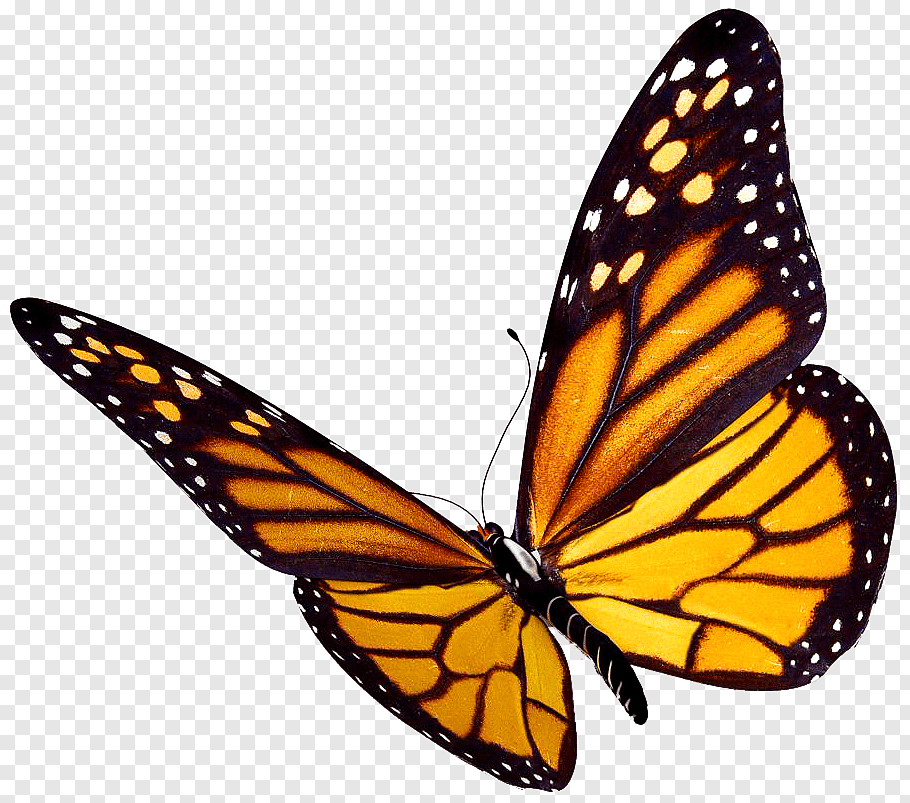 Monarch Butterfly Insect Watercolor Butterfly Png Butterfly Clip Art Butterfly Watercolor Monarch Butterfly