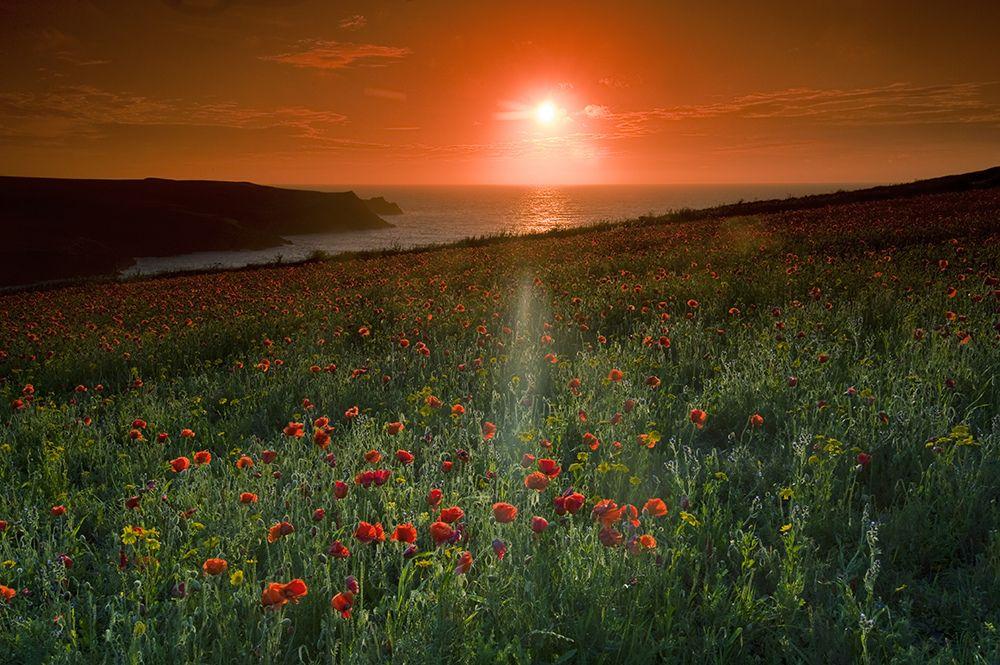 Sunset | by Jacky Parker Floral Art