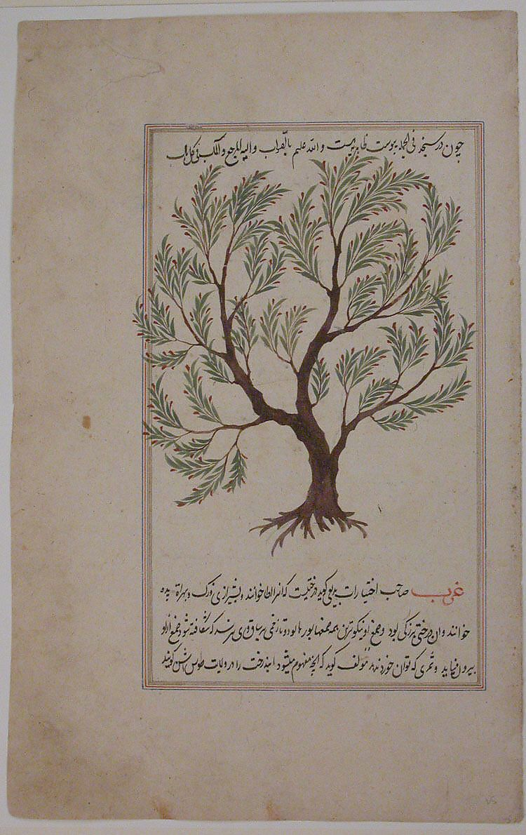 Folio From A Materia Medica Of Dioscurides 17th Century Isfahan