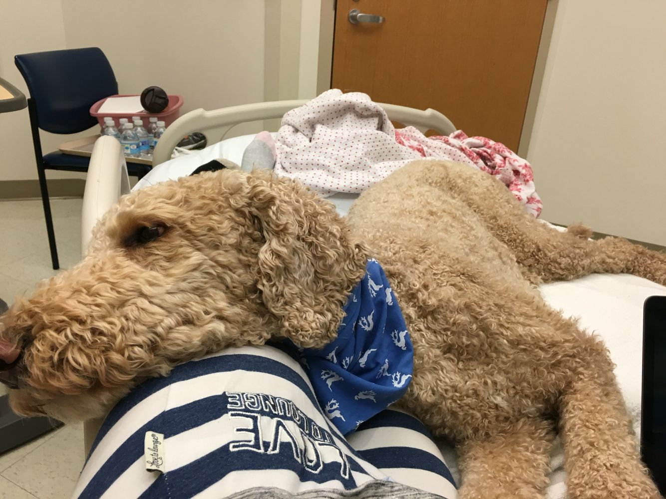 Hospital Life With Oliver My Service Dog Check Out Our Videos On