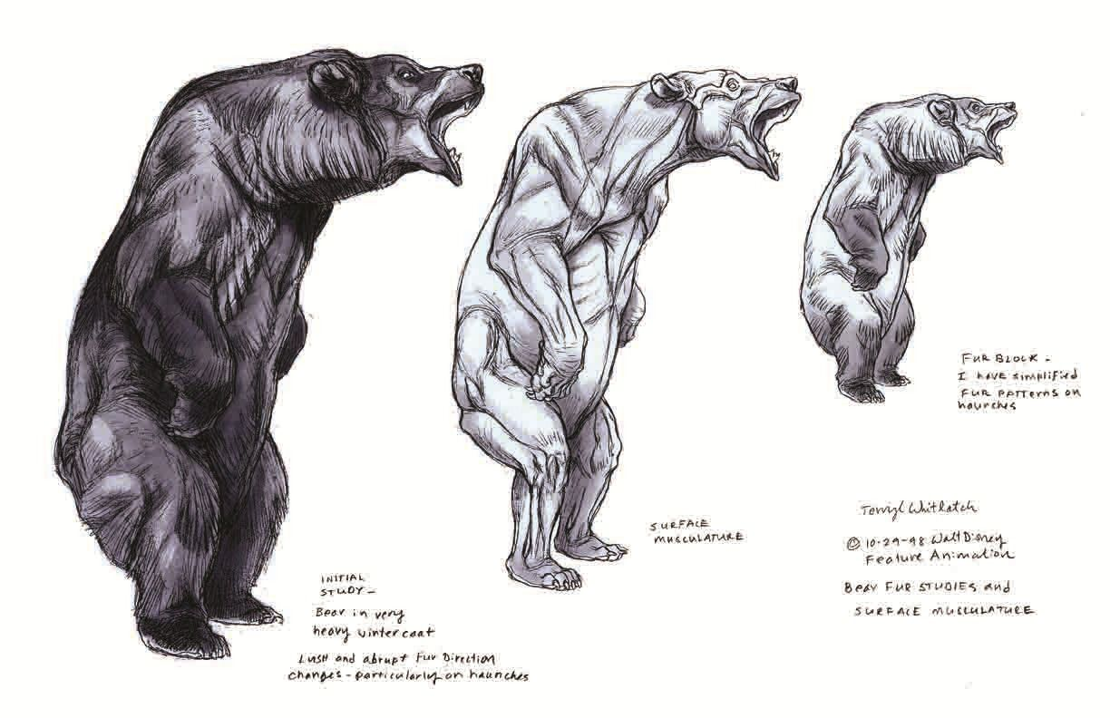 AnatoRef — Bear Anatomy Top Image and Bottom (Right) Row 2... | bear ...