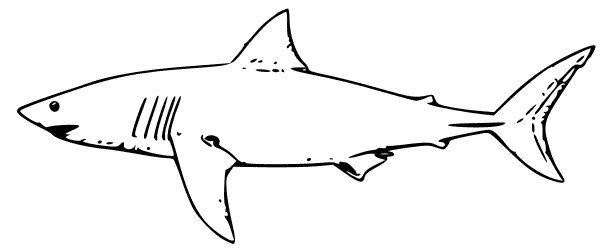 Free Black And White Shark Clipart Shark Coloring Pages Shark Pictures White Sharks