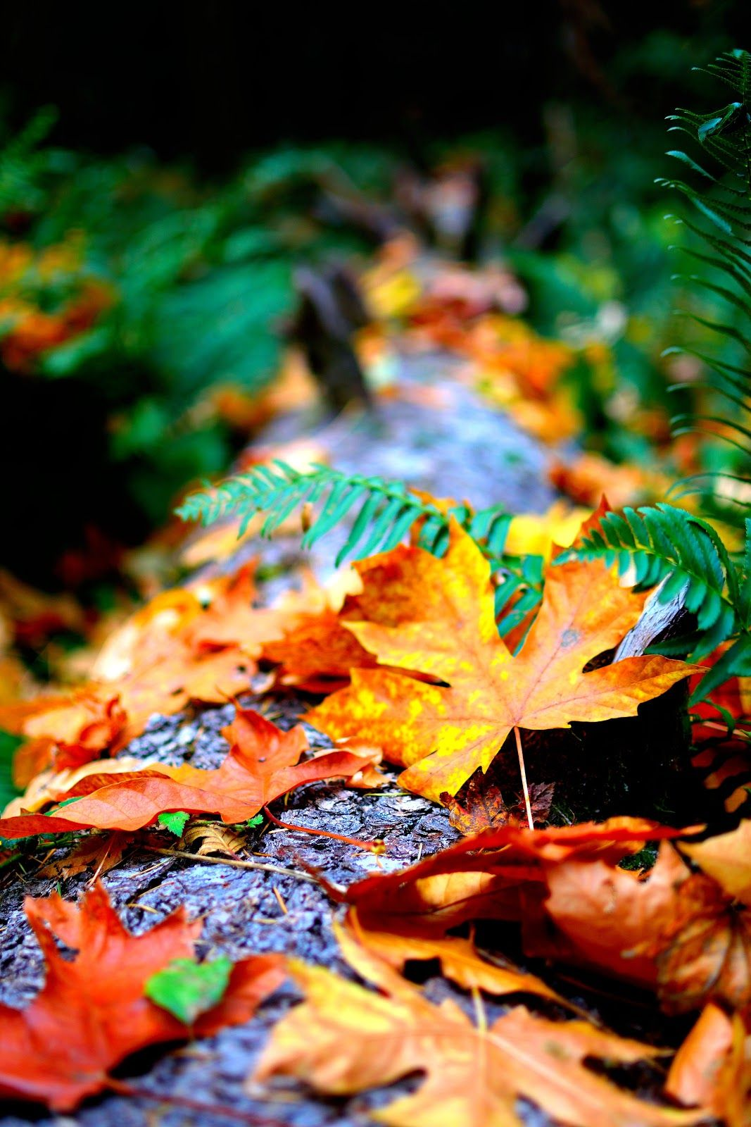 4k Wallpaper Autumn Leaves Blur Close Up Photo of Dry