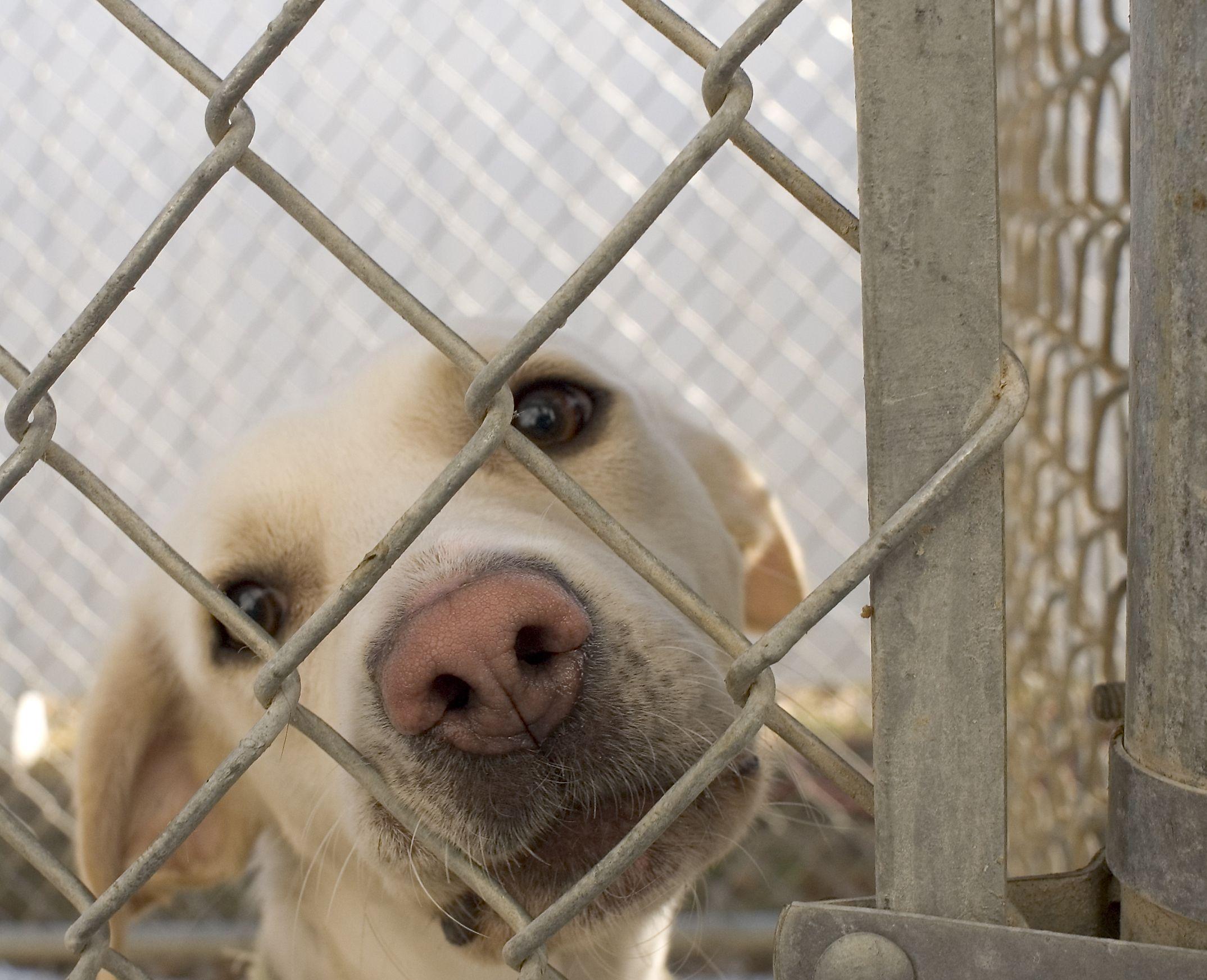 Worries About Pet Adoption Debunked