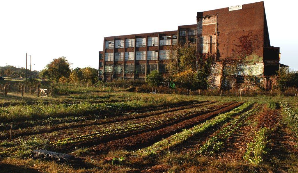 Knoxville's Neighborhood Farm The neighbourhood, Fields