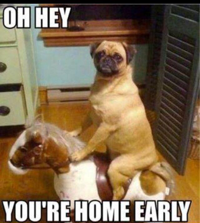 Dog funnies. Lol!