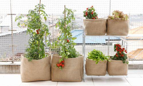 ベランダ菜園初心者さんへ 手に入りにくい野菜も意外と簡単に作れるん