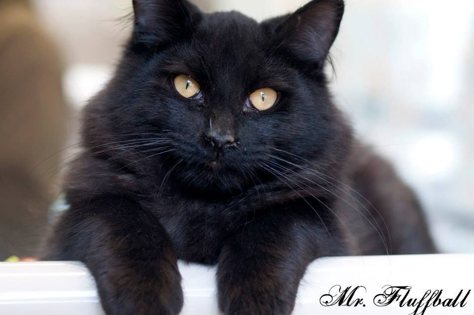 Pin by Melissa Micciche on Pinning for Pets | Animals
