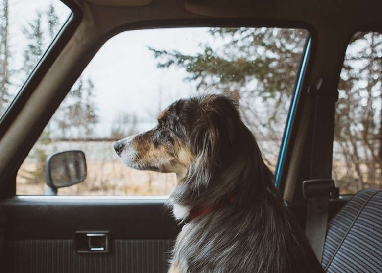 Rise and Shine (24 Photos) (17) Dog life, Wild book, Dogs