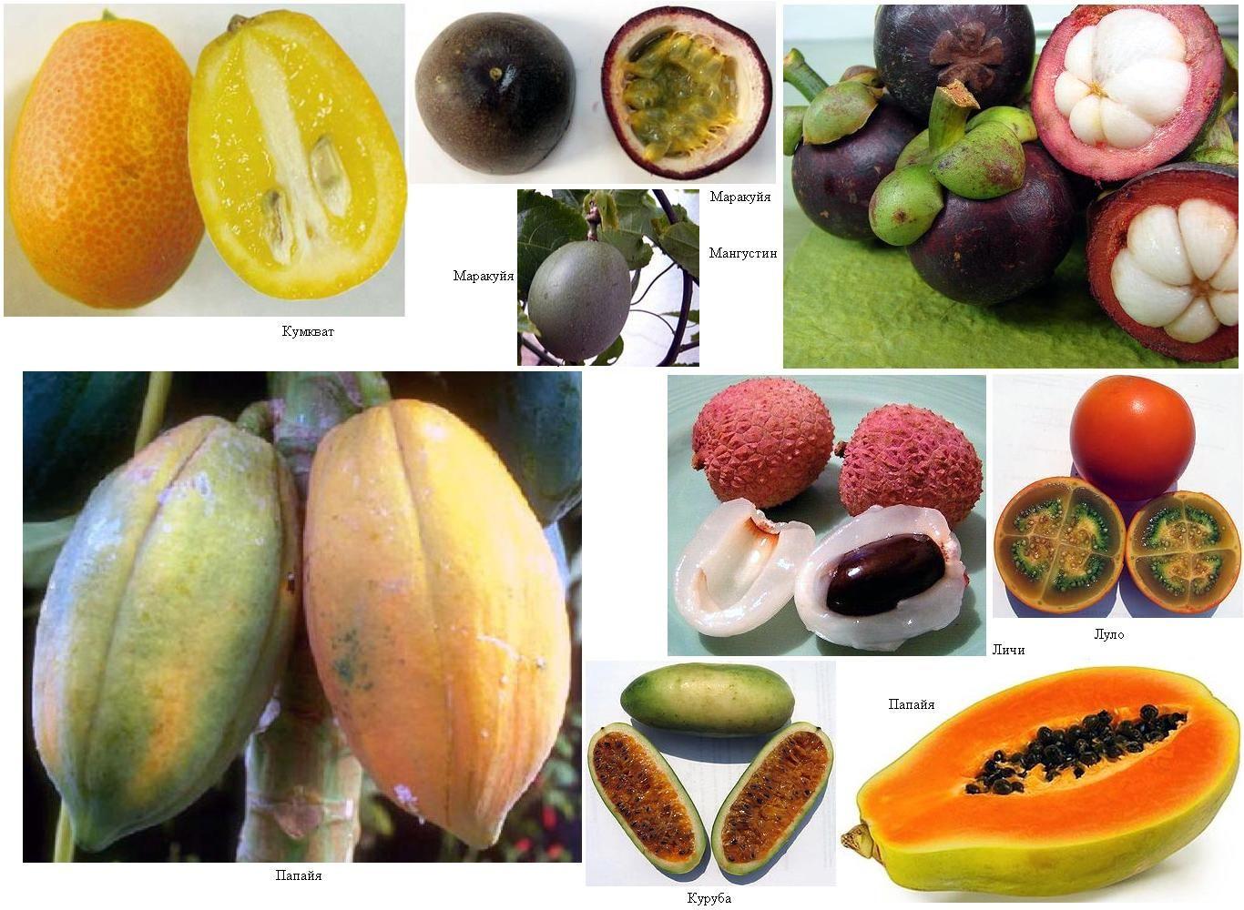тропические фрукты названия картинки том, что для
