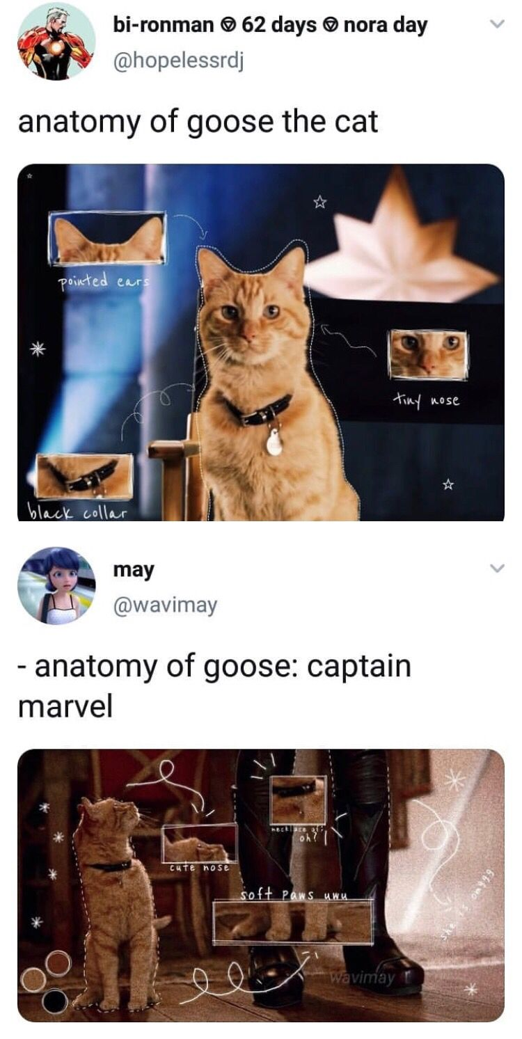 Pin By Gotbeans On Marvel Funny Memes For Him Funny Memes Marvel