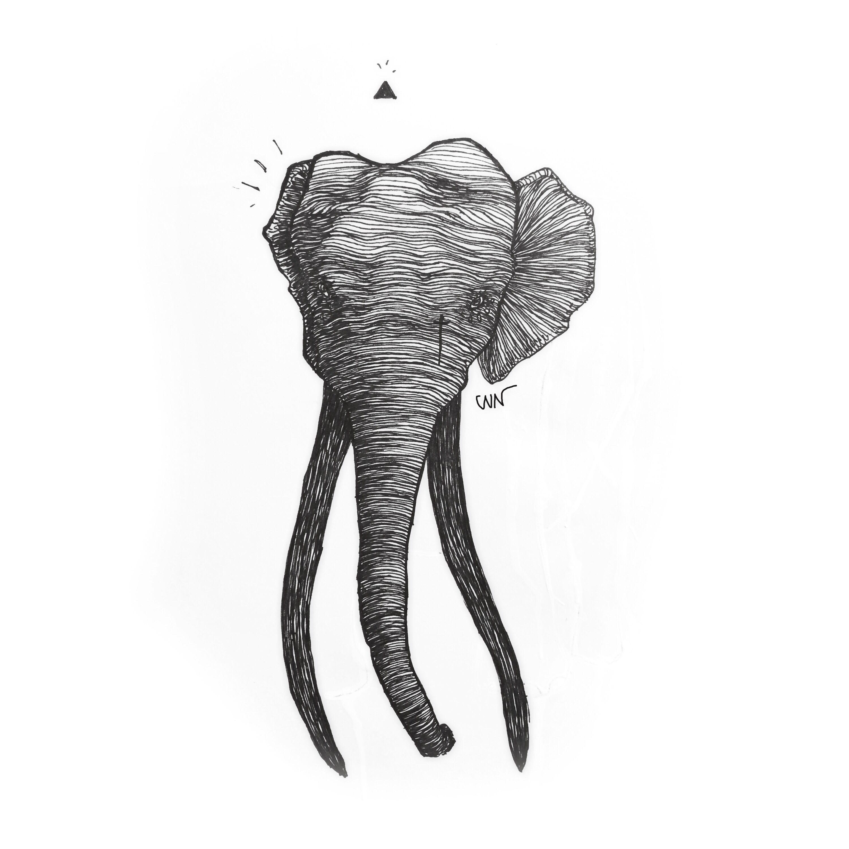 Elephant #cain