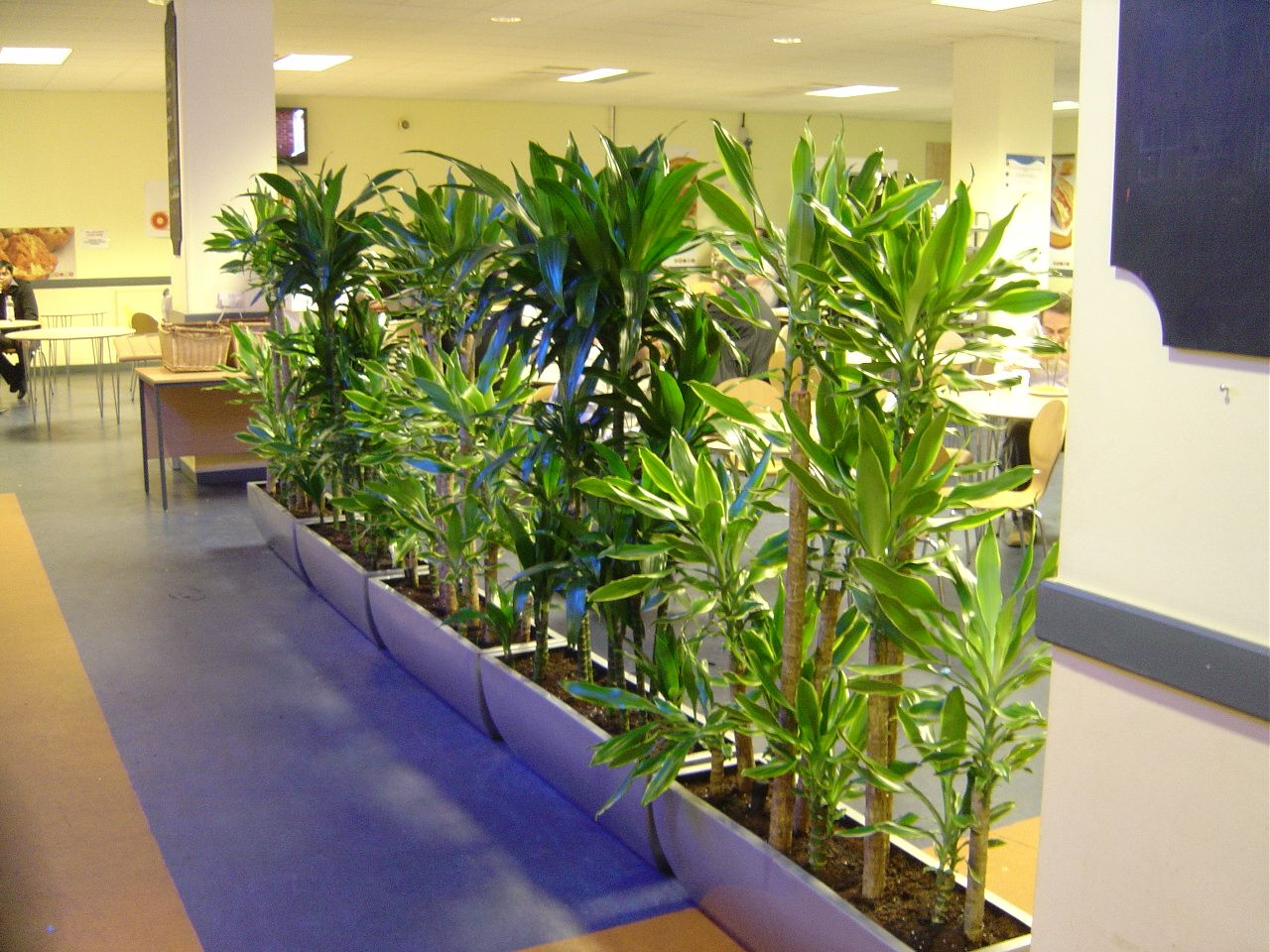Let 39 s try to make that work again squiz melbourne office - Plantas de interior para salon ...