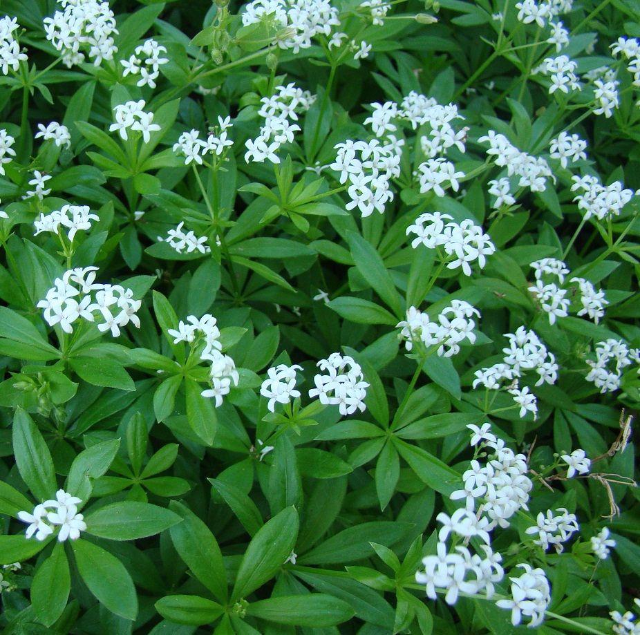 Photo of Bodendecker für fantastische Gartengestaltung
