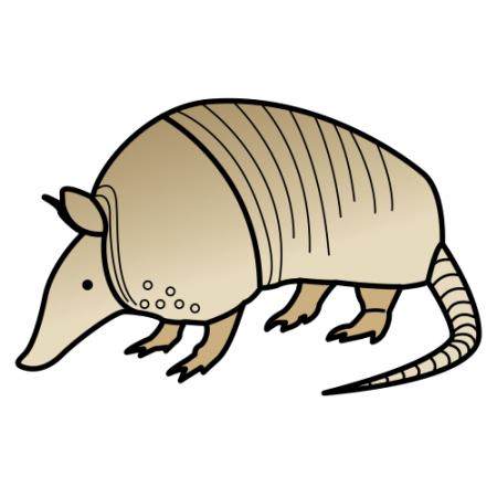 Armadillo | animales | Pinterest | Animales