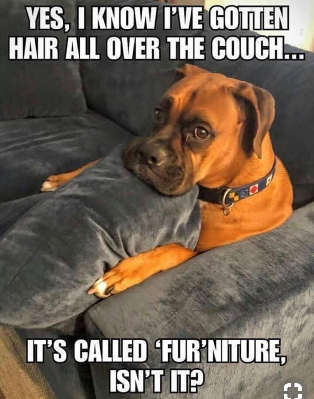 We Make 100 Human Grade Dog Food Dog Recipe Boca Raton Delray West Palm Ft Lauderdale Miami Funny Cats And Dogs Funny Dog Pictures Funny Dog Memes