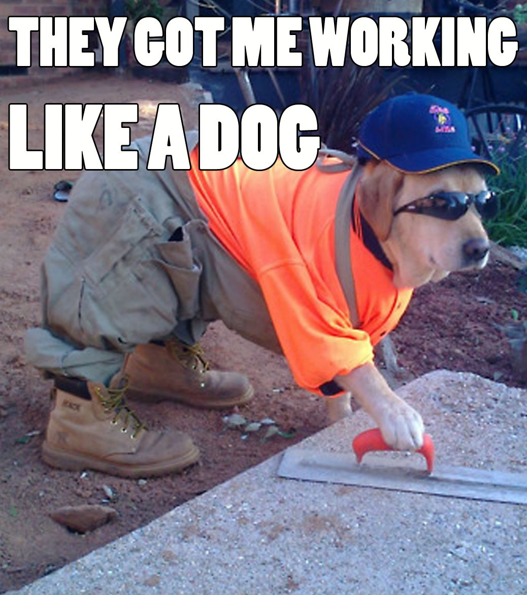 They got me working like a dog. To brighten your day with