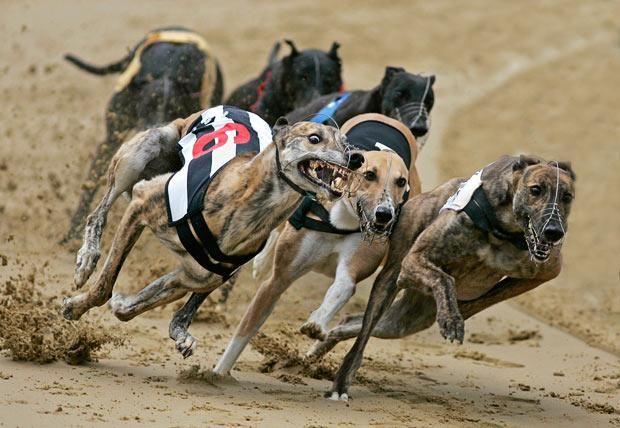 Gambling dog races black casino free gaming jack play