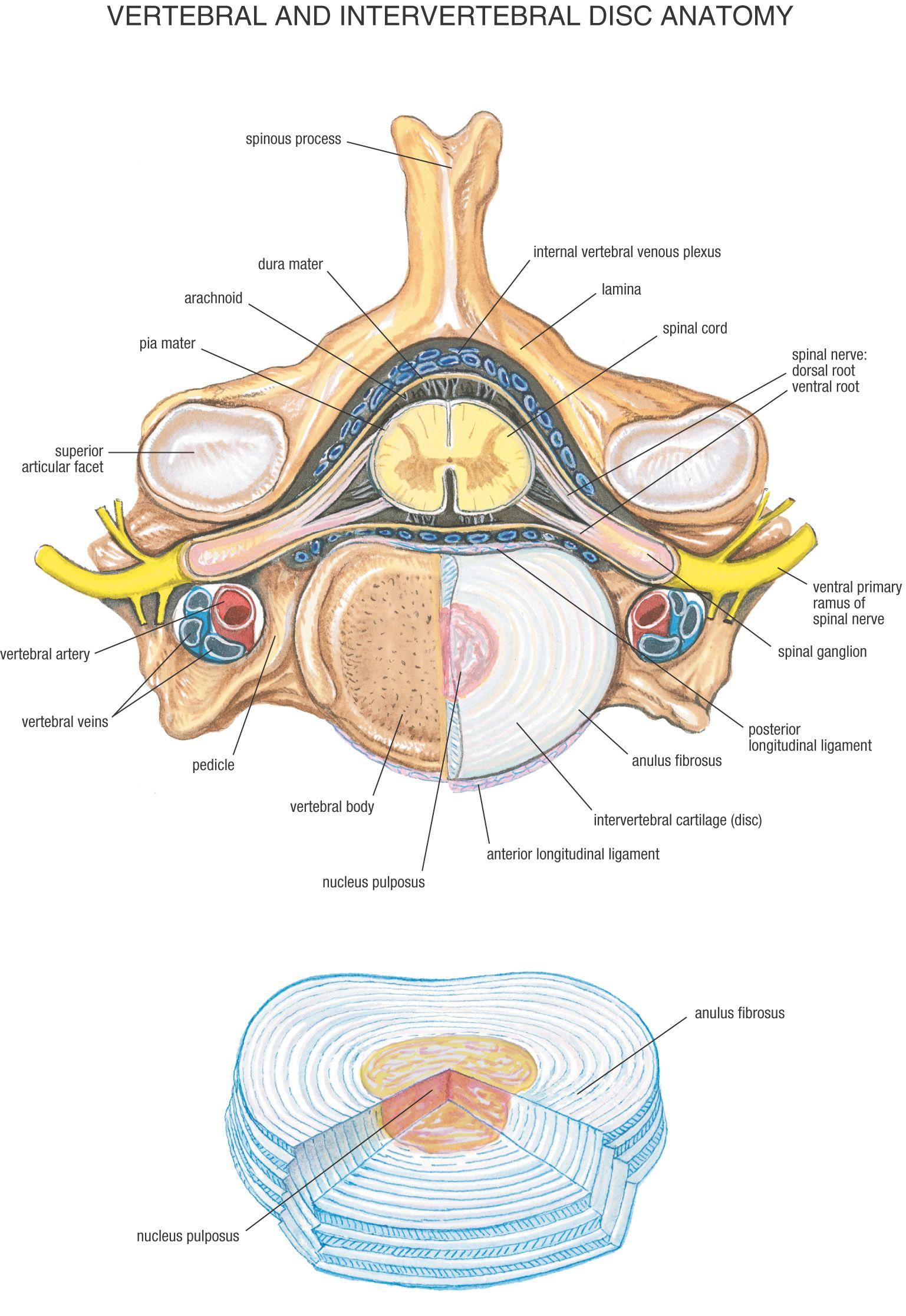 Fysiurgisk Massør   Tag hånd om din krop   Anatomy   Pinterest ...