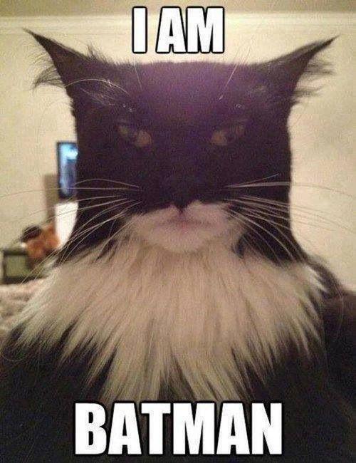 Batkitty!!!