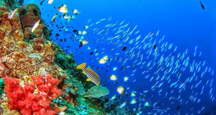Harga Tiket Masuk Dan Alamat Taman Laut Bunaken Pesona Keindahan Laut Indonesia Tiada Tara Pemandangan Foto Bawah Air Pesisir